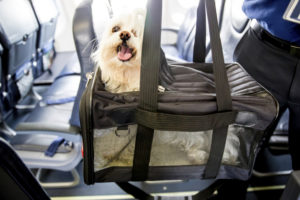 flying-with-pets
